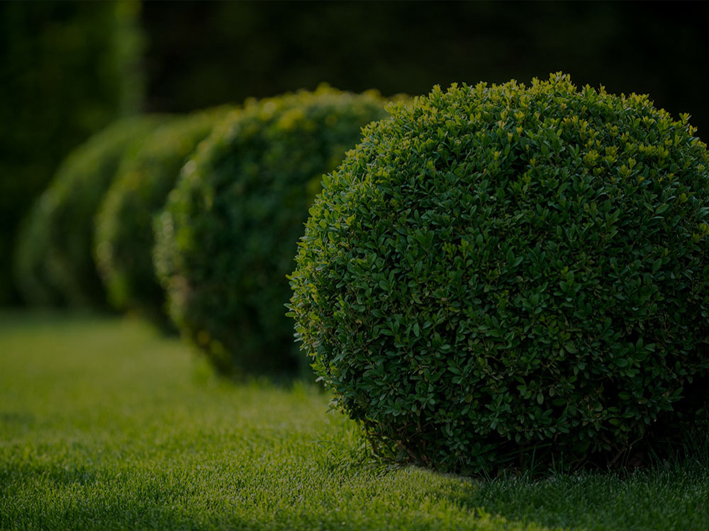 Coeur d'Alene Landscaping