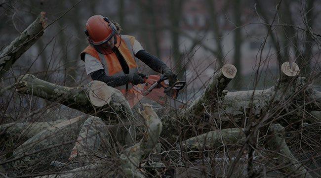 Post Falls Tree Service